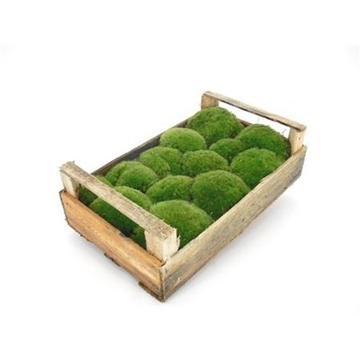 1 Kiste Bollenmoos