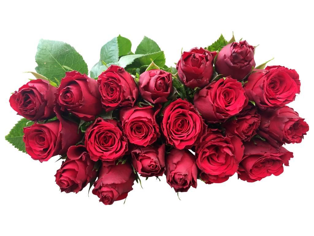 rote rosen online bestellen bei bezahlbare. Black Bedroom Furniture Sets. Home Design Ideas