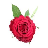 100 Rosen Upper Class (Rot)