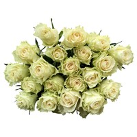 100 Rosen Creme-Weiß