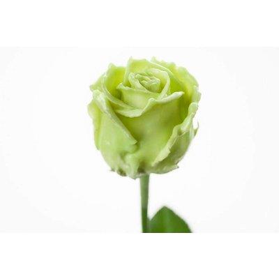 5 Wachs Rosen P340(Mint Green)