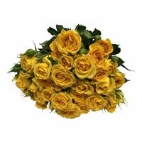 10 Tros-Rosen Jellow Babe (Gelb)