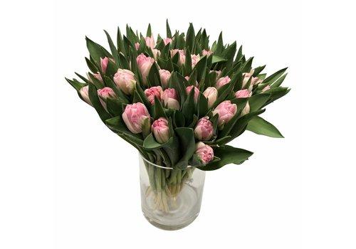 10 Tulpen Foxtrot (Gefüllt)