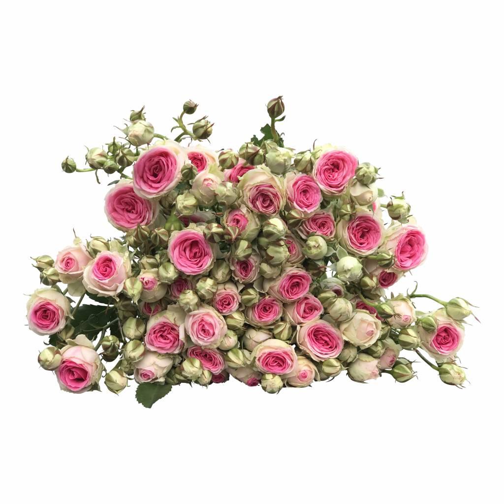 10 rosa tros rosen mimi eden im bund bestellen. Black Bedroom Furniture Sets. Home Design Ideas