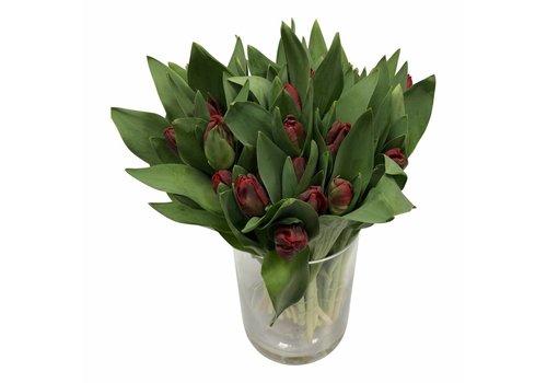 10 Tulpen Topparrot