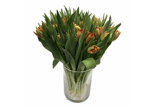 10 Tulpen Viking
