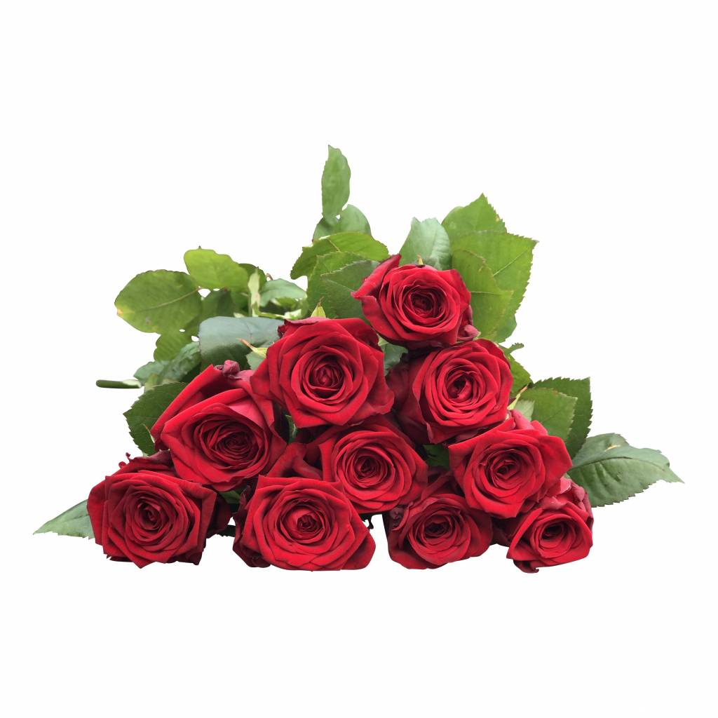 100 Rote Rosen Red Naomi Bestellen auf bezahlbare-blumen