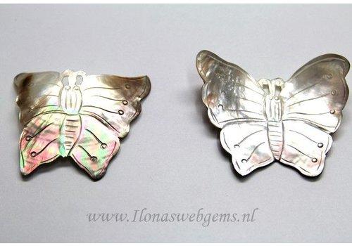 Black lip shell vlinder ca. 55x50mm