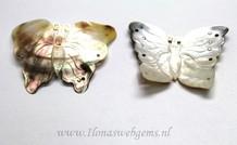 Black lip shell vlinder ca. 60x56mm