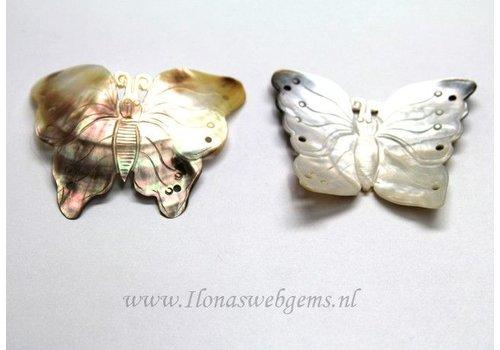 Black lip shell Butterfly app. 60x56mm