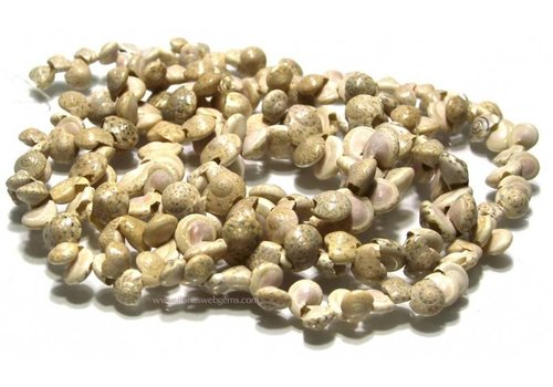Schelp  Perlen naturel ca. 9x6mm