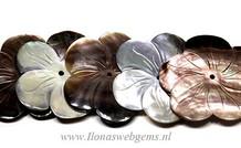 5 stücke Black lip shell bloem ca. 35mm