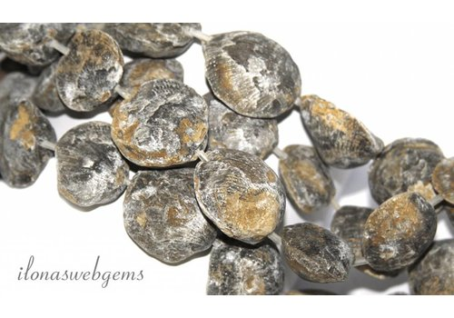 Fossil beads approx 25-31mm