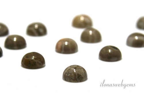 Fossil coral cabochon 8mm