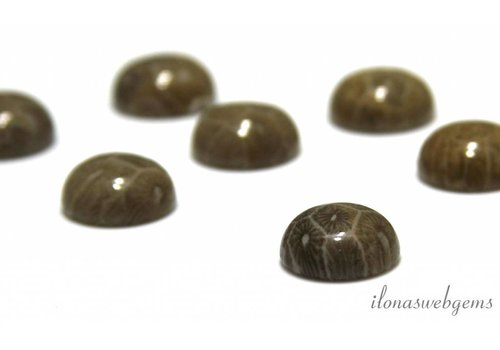 Fossil coral cabochon 12mm