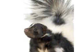 Stinkdier