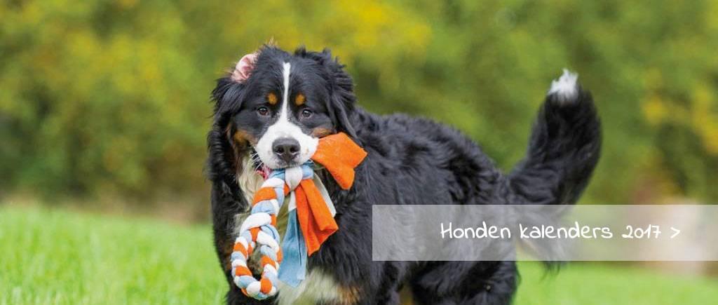 Honden kalenders 2017