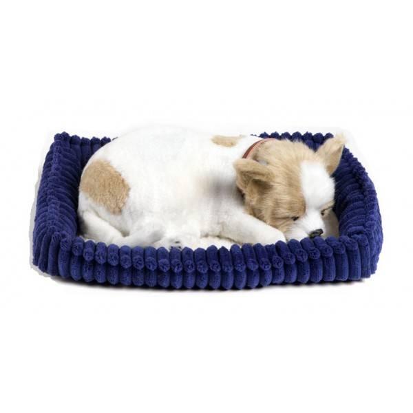 Chihuahua Perfect Petzzz