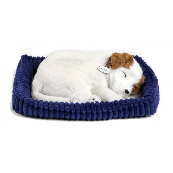 Jack Russell Terrier Perfect Petzzz
