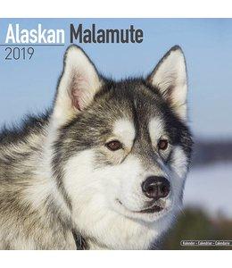 Avonside Alaskan Malamute Kalender 2019