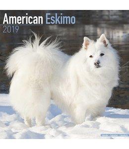 Avonside American Eskimo Kalender 2019