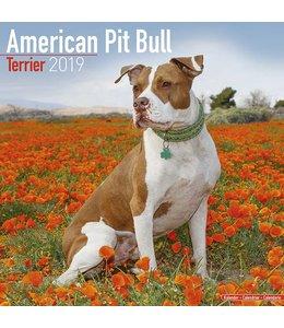 Avonside American Pit Bull Terrier Kalender 2019