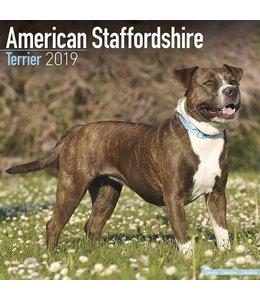 Avonside American Staffordshire Terrier Kalender 2019