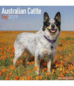Avonside Australian Cattle Dog Kalender 2019