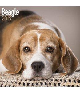 Avonside Beagle Kalender 2019