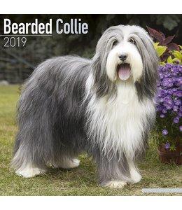 Avonside Bearded Collie Kalender 2019