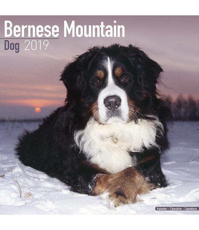 Avonside Berner Sennen Kalender 2019 Avonside