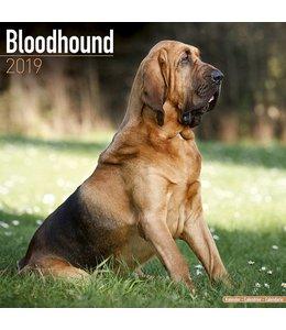 Avonside Bloedhond Kalender 2019