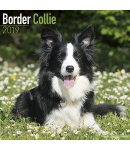 Avonside Border Collie Kalender 2019