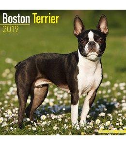 Avonside Boston Terrier Kalender 2019