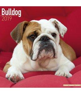 Avonside Engelse Bulldog Kalender 2019