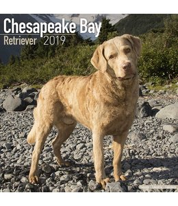 Avonside Chesapeake Bay Retriever Kalender 2019