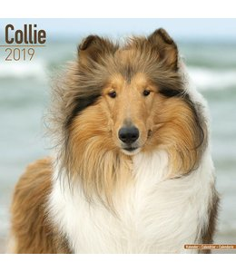 Avonside Schotse Herder / Collie Kalender 2019