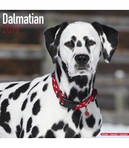 Avonside Dalmatier Kalender 2019