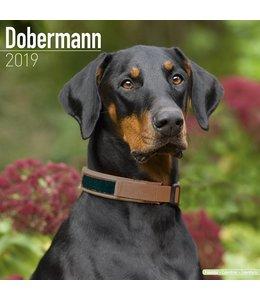 Avonside Dobermann Kalender 2019 (euro)