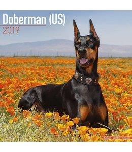 Avonside Dobermann Kalender 2019 (US)