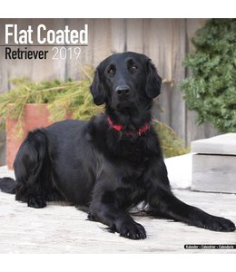Avonside Flatcoated Retriever Kalender 2019