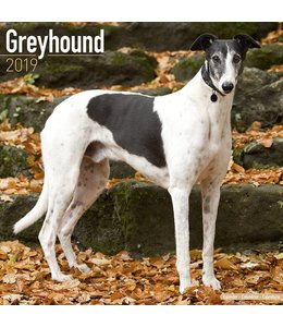 Avonside Greyhound Kalender 2019
