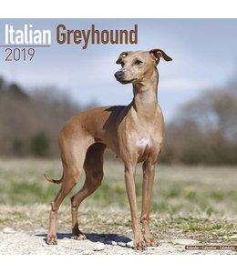 Avonside Italian Greyhound Kalender 2019