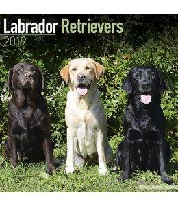 Avonside Labrador Retriever Mixed Kalender 2019