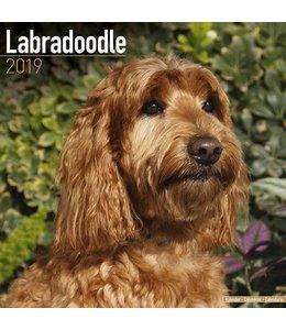 Avonside Labradoodle Kalender 2019