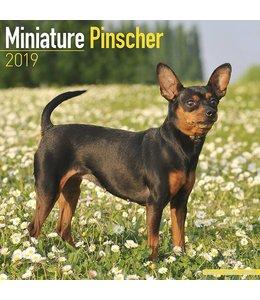 Avonside Miniatuur Pinscher Kalender 2019