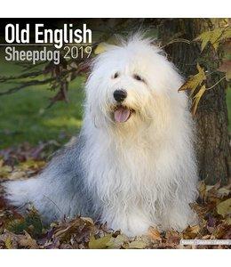 Avonside Bobtail / Old English Sheepdog Kalender 2019