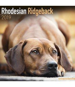 Avonside Rhodesian Ridgeback Kalender 2019