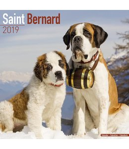Avonside Sint Bernard Kalender 2019