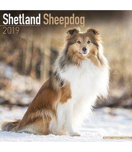 Avonside Sheltie - Shetland Sheepdog Kalender 2019